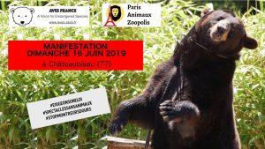 Spectacle montreur d'ours annulé à Chateaubleau !