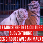 Des cirques avec animaux subventionnés