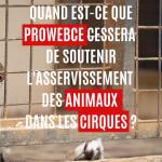 Lancement pétition ProwebCE