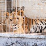 Subventions et cirques avec animaux