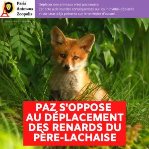 PAZ S'INQUIÈTE D'UN ÉVENTUEL DÉPLACEMENT DES RENARDS DU PÈRE-LACHAISE