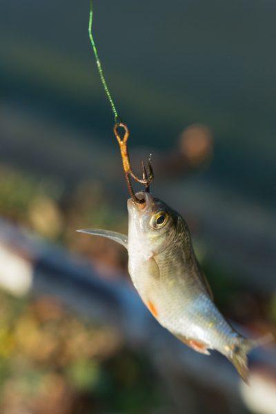 poisson appat accroché par la bouche 01
